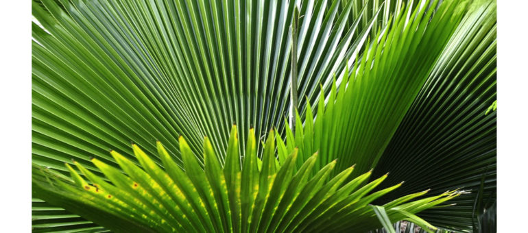 saw palmetto stop hair loss